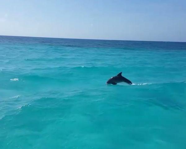 Playa cielo, cozumel... Beach Dolphins Cozumelmexico Playa Beach Photography Discovery Discoverychannel