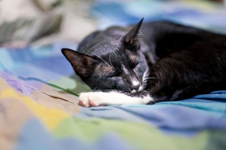 black cat lying