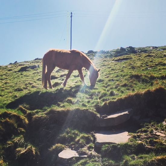 Loveanimals Animal Themes Nature Sunlight Landscape Grass POTTOK Pays Basque France Euskalherria Euskadi Rhune Wildlife & Nature