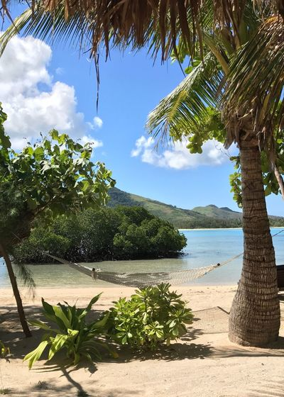 Lazy Hammock Days in Fiji Sea Tree Water Nature Beach Palm Tree Growth Beauty In Nature Scenics Sky Shore No People Outdoors Plant Tranquil Scene Tranquility Day Horizon Over Water Hammock Miles Away