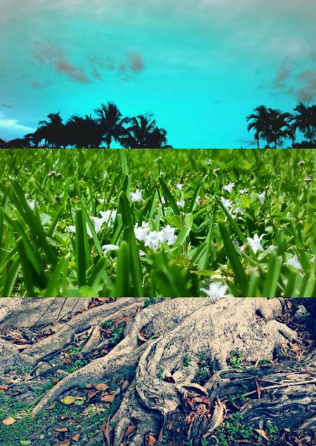 Perfect Match Piecing Together Land And Sky Landscape Tadaa Community Scenics Beauty In Nature Grass Close-up Tranquility Green Color Nature Field Agriculture Tree Sky Day Rural Scene