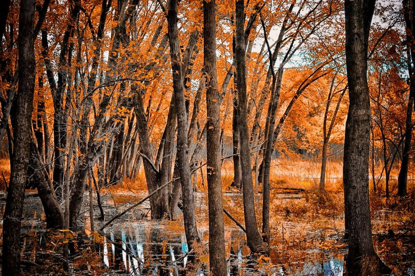 Autumn Reflection Autumn Beauty In Nature Branch Bridge D Day Dreamy Fall Fall Colors Forest Landscape Nature No People Orange Leaves Outdoors Park Reflection River Sky Sunset Tree Tree Bark Tree Trunk Water Woods The Great Outdoors - 2017 EyeEm Awards