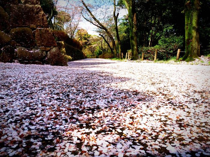 Cherry Blossoms Carpet Pink