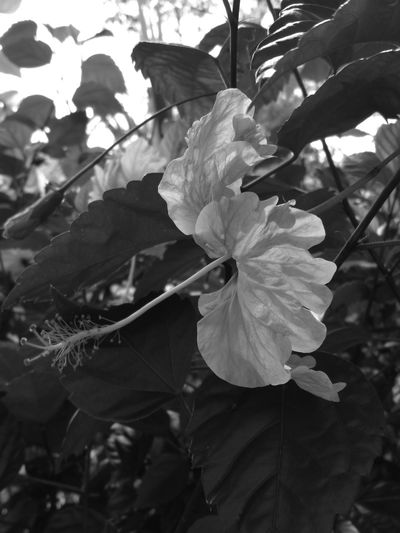 Flowers in B&W Taking Photos Relaxing Feel The Journey