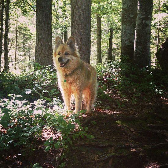 Wandern Mit Hund Perfekteswetter