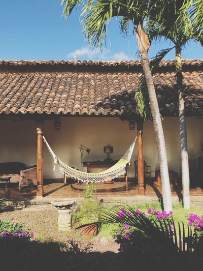 Hammock in the yard. In Nicaragua. 27.02.2019 Life In Nicaragua 2019 Place For Relax Relaxing Hammock Architecture Nicaragua Houses Nicaragua Yards Nicaragua Yard Built Structure Plant Architecture Building Exterior Nature Tree Sky House Roof Sunlight No People Day