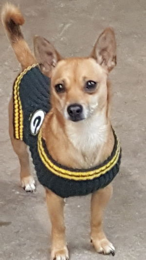 Dogs Of EyeEm Dogsareawesome Doglovers Game Day Green Bay Packers Football Fans