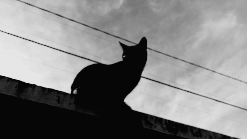 One Animal Silhouette Black And White Photography K6 Plus