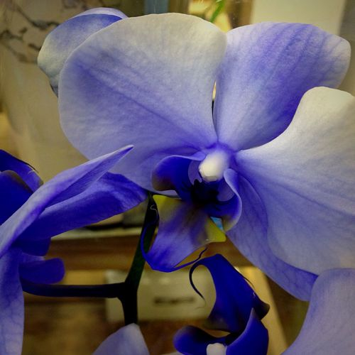 Orchids Blue Orchids Blue Nature Photography Flower Collection Flower Photography