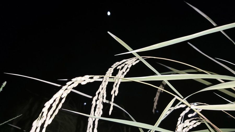 Low angle view of illuminated wire against sky at night