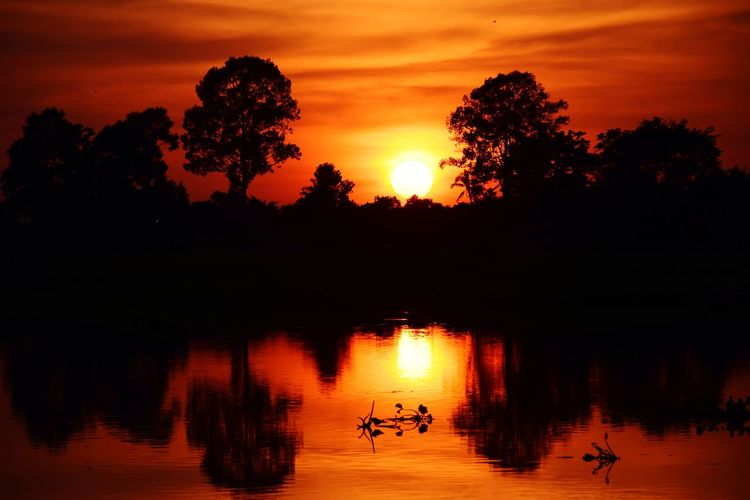 Silhouette trees by lake against orange sky during sunset