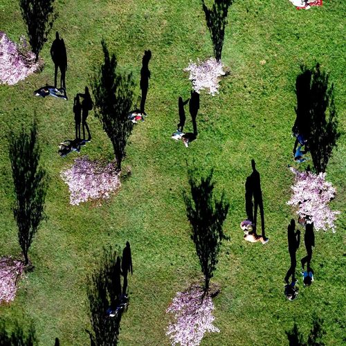 Under Sakura life Plant Group Of People Nature Real People Day Tree Growth People Park Lifestyles Crowd Green Color Outdoors Leisure Activity