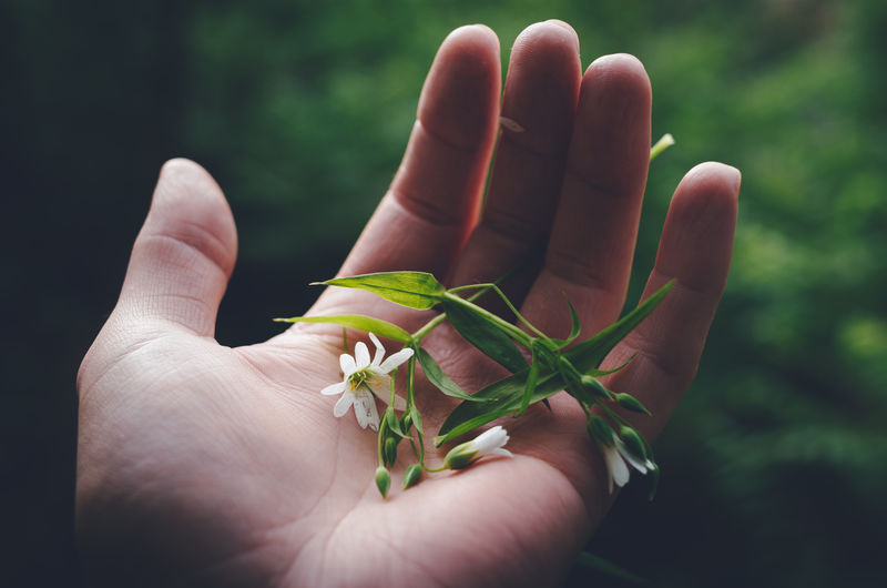 Holding a fragile broken flower in a palm of a hand.