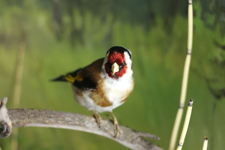 Bird One Animal Red No People Animals In The Wild Animal Themes Nature Outdoors Beauty In Nature