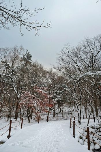 Snow Winter Cold Temperature Tree No People Outdoors Nature Beauty In Nature Day Sky Traveling 원주 Korea 겨울 구룡사 Winterscapes Travel Photography Winter Landscape Travel Winter Trees Beauty In Nature Red Leaves Snow