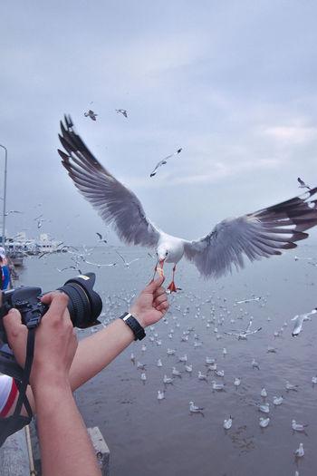 bird... Human Hand Bird Water Flying Whale Sea Women Humpback Whale Beach Flock Of Birds Sea Life