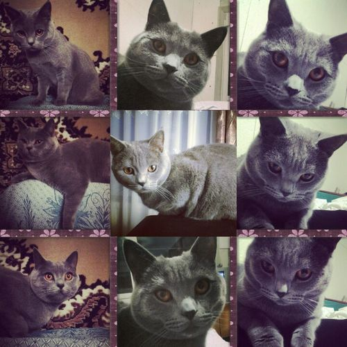 I love my cat First Eyeem Photo