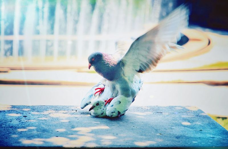 EyeEm LOST IN London Bird Animal Themes Animals In The Wild One Animal Animal Wildlife Spread Wings No People Nature Food And Drink Food Eating Day Perching Outdoors Full Length