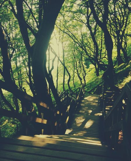 Wood stages on the coast Beautiful Forest Stages Sea Sunset Tree Plant Nature Sunlight Shadow Footpath Direction Outdoors