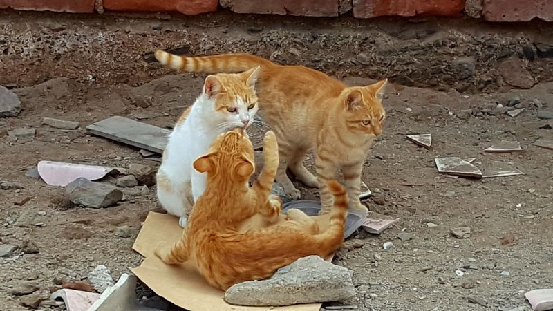 Stray cats Family Cat Pets Feline Domestic Cat Close-up Stray Animal Kitten Young Animal Cat Animal Family Ginger Cat