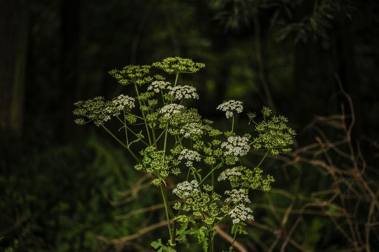 Wild plant in summer