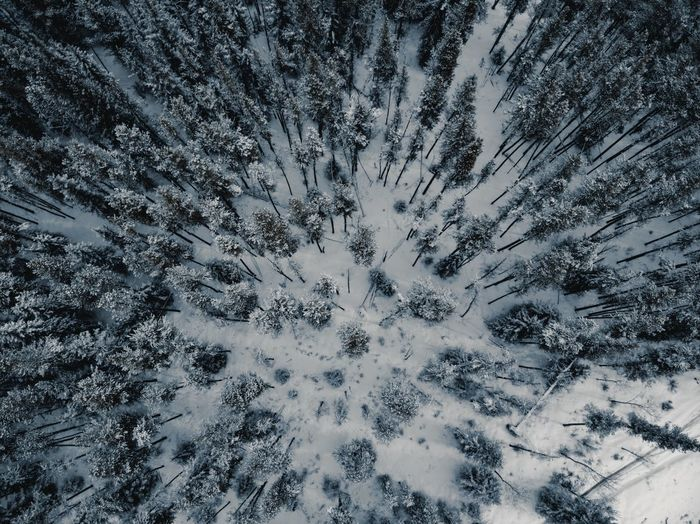 Above the trees Sonyalpha Winter Snow Winter Cold Temperature Nature Tree Land Beauty In Nature First Eyeem Photo
