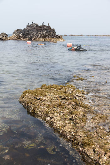haenyeo who is a female diver picking up sea weed and sea food Beach Beauty In Nature Clear Sky Day Female Diving Duck Haenyeo JEJU ISLAND  Nature No People Outdoors Rock - Object Scenics Sea Seaside Sky Tranquility Water