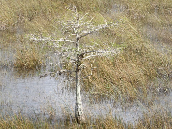 Beauty In Nature Cypress Trees  Day Dwarf Cypress Everglades National Park Grass Idyllic Landscape Nature No People Non-urban Scene Outdoors Remote Scenics Tranquil Scene Tranquility Tree Water