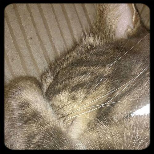Cat♡ Nofilter