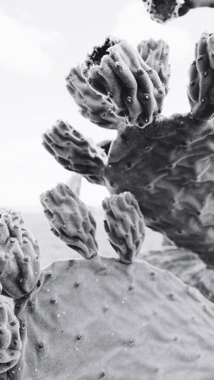 Stark Blackandwhite Sky Queensland Outback Drought Australia Cactus Succulent Plant Growth Plant Nature Close-up Beauty In Nature No People Sand Water Beach Underwater Outdoors UnderSea Tranquility Succulent Plant Day Land Cactus Sea Animal Wildlife Sky The Great Outdoors - 2019 EyeEm Awards My Best Photo
