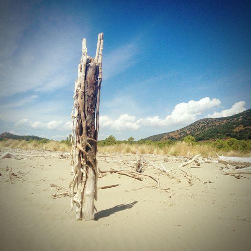 Enjoying The Sun Summertime Tuscany IPhone5 Iphonephotography Totem Wood Sea Beach