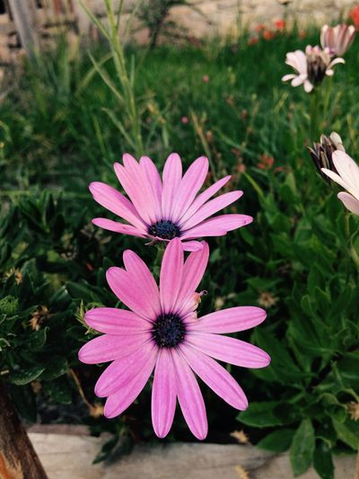 Flowering Plant Flower Plant Growth Fragility Vulnerability  Petal First Eyeem Photo