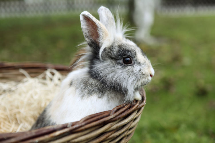 Close-up of bunny in a basket