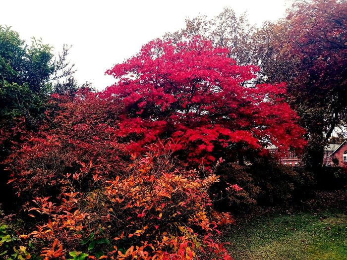 Red flowering plant against trees during autumn