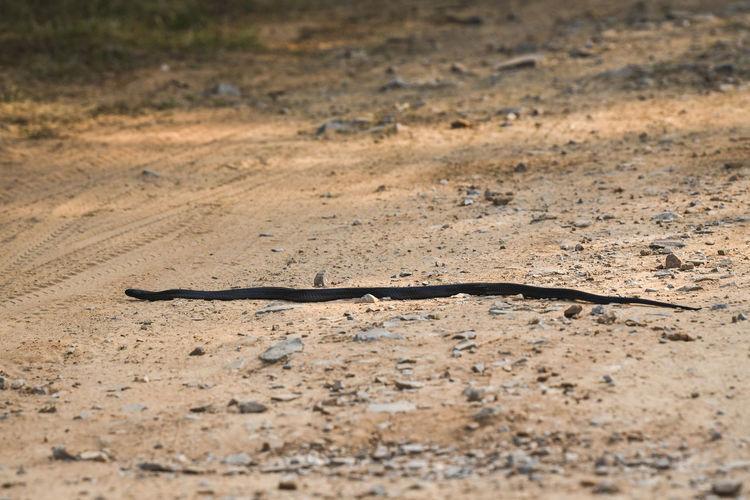 View of lizard on a field