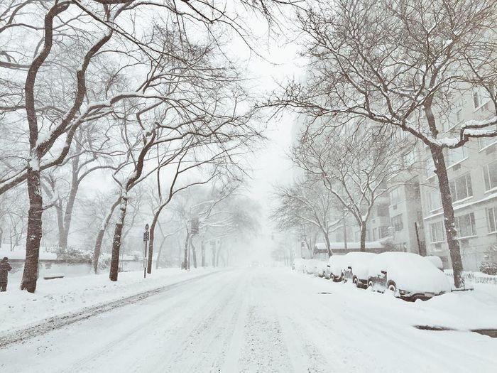 Bare Tree Blizzard Empty Fifth Ave. Frozen New York Quiet Snow Street Upper East Side Weather Winter