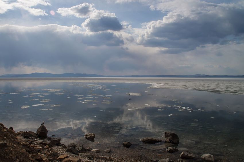 Spring at the seaside. Amur Bay. Vladivostok. Seagull Sea Seaside Seascape Sky Cloud Cloudscape Reflection Floes Spring Bay