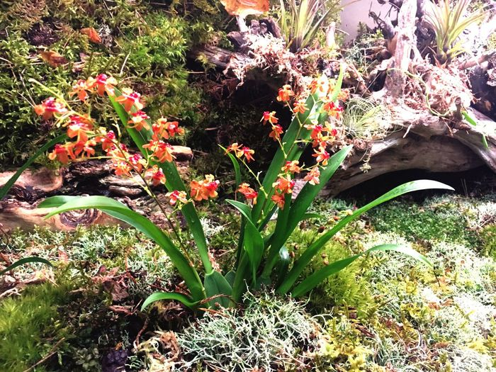 Flower Terrarium🍀 Nature Plant Beauty In Nature Orchid Tilandsia