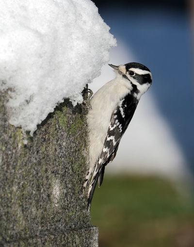 Close-up of bird perching on tree trunk