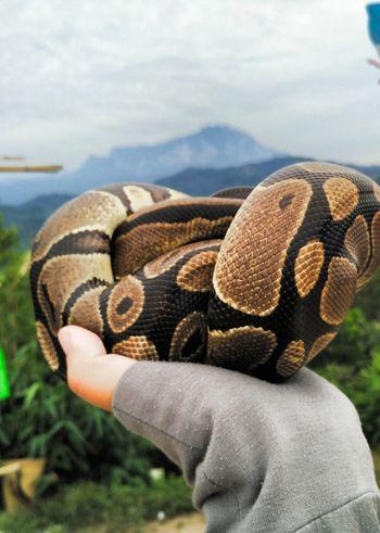 Snake ♥ Kinabalumountain PerahuHill Nature Morning View Sabah Borneo Tamparuli Sleeping Snake Fresh Air...
