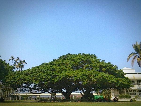 Trees Blue Sky Sun Picnic Tyan