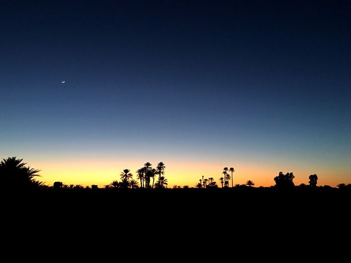 Sunset in the desert Scenics Sunset Palm Trees Silhouette Sky Copy Space Tree Sunset Nature Group Of People Clear Sky Beauty In Nature Scenics - Nature Night Blue Outdoors Orange Color Tranquil Scene Plant Tranquility