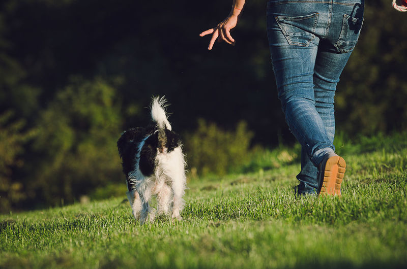 Low section of person walking with dog on grassy field
