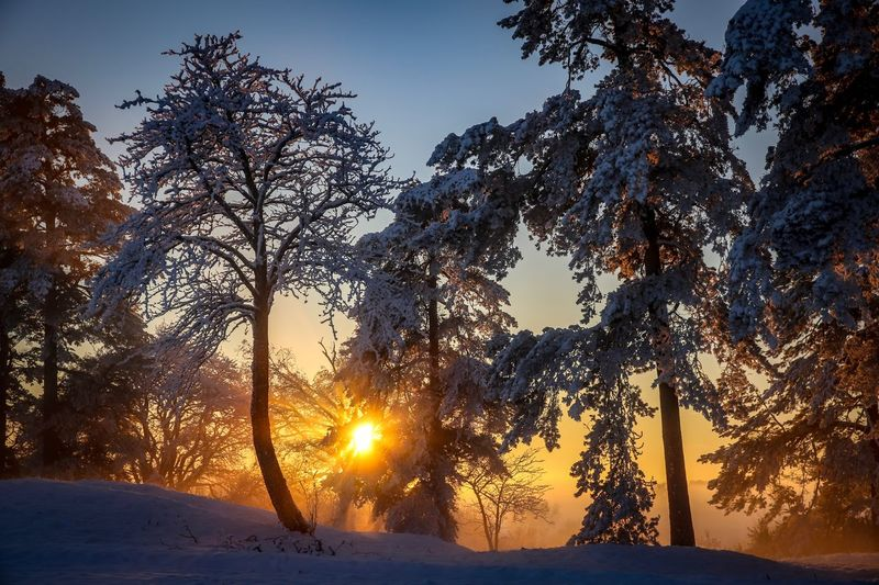 Trees On Snow Covered Landscape During Sunset