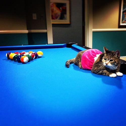 I scratched? Everybodylovesprincess Poolcat Princesshustler Catsofinstagram @lacie_wall @greg1gb @vic_thexton
