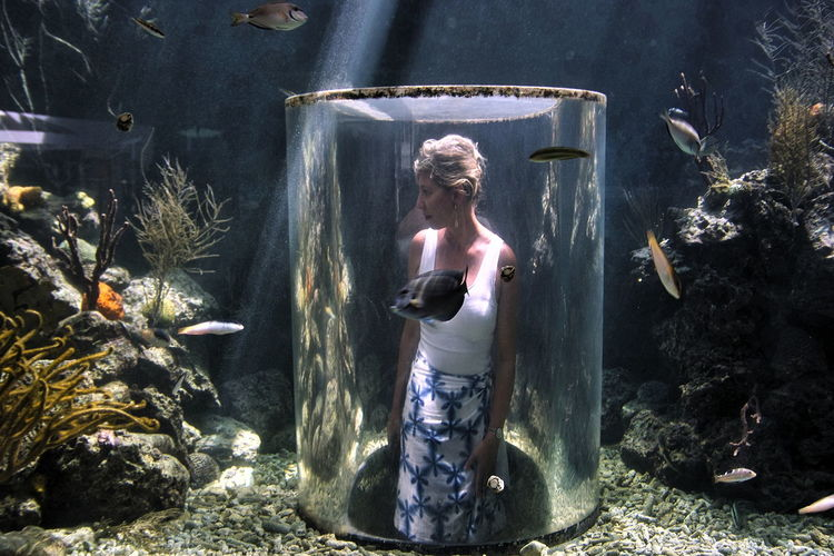 Protected but in the middle of things: Sea life in Curaçao Adult Adults Only Aquarium Life Caribbean Sea Life Day Fish-watching Indoors  Nature One Person Only Men People Portrait Sea Aquarium Young Adult