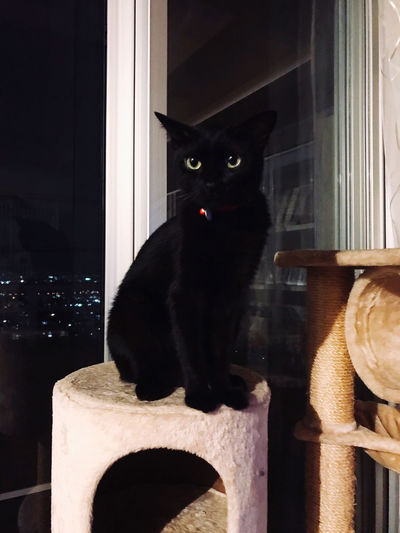Portrait of black cat sitting on chair at home