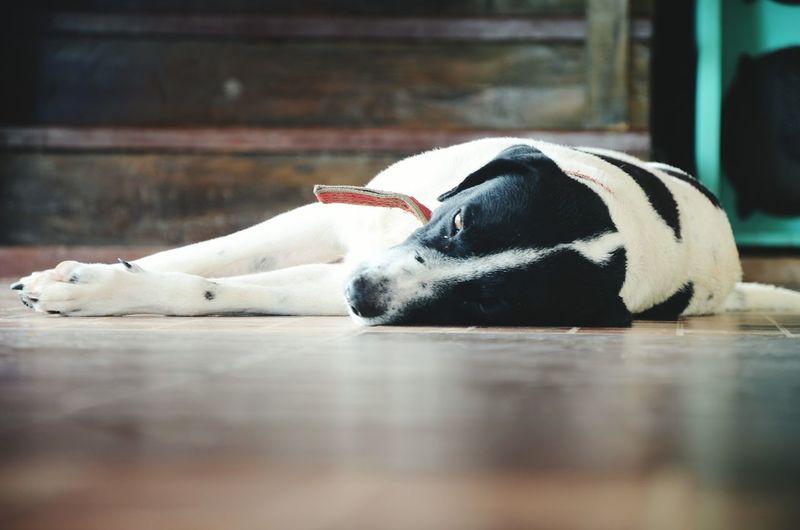 Relaxing Dog Pets Outdoors Close-up Wanderlust Vacations Getoutside Lifeofadventure Neverstopexploring