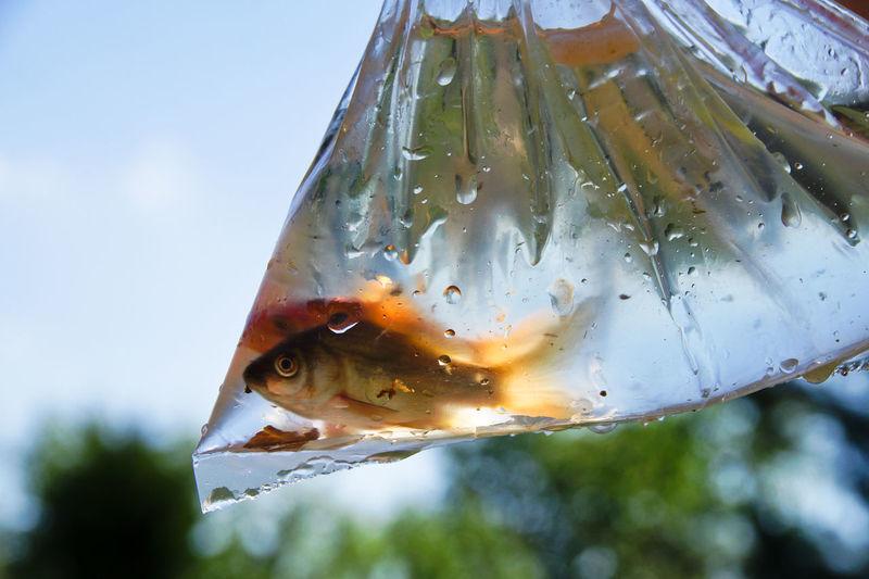 Close-Up Of Fish In Plastic Bag Against Sky