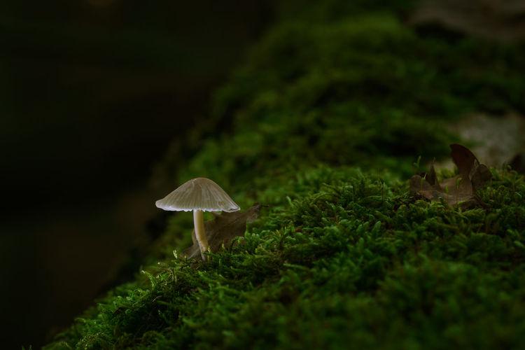 Close-up of mushroom growing on moss